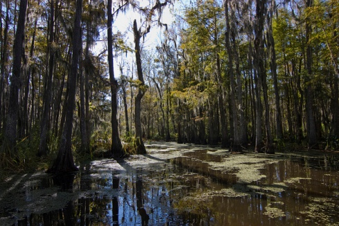 "Bayou (Photo from ""Xavier Lambrecht"")"